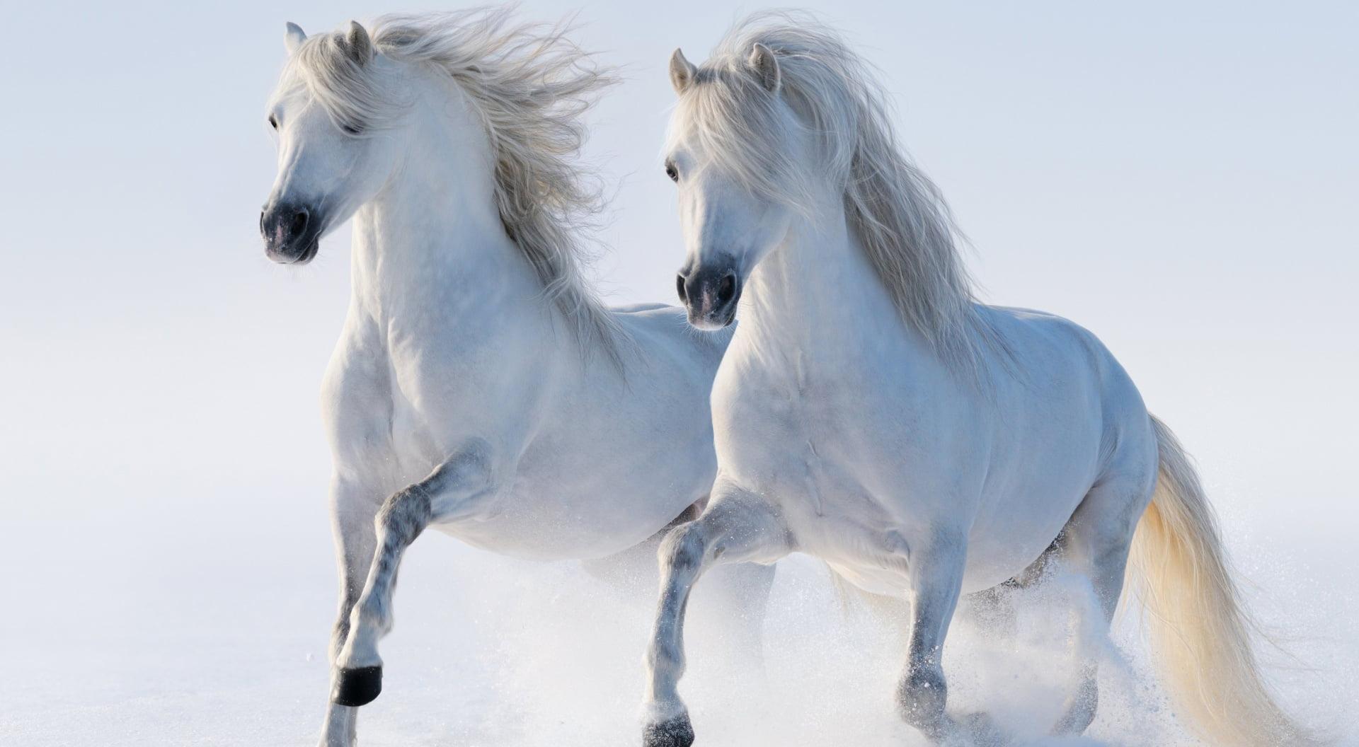caballos-blancos-wallpaper