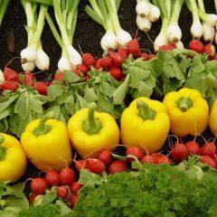 Alimentos y productos transgénicos: ¿cuáles son?