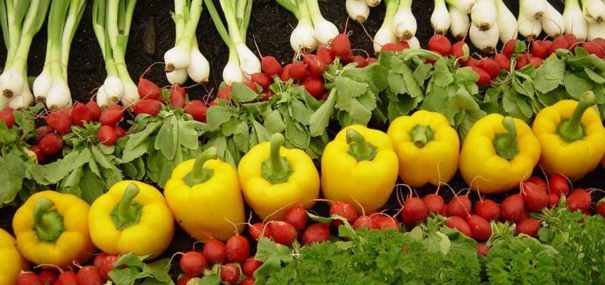 Productos Agrícolas - Almacenes Antonio Guerrero