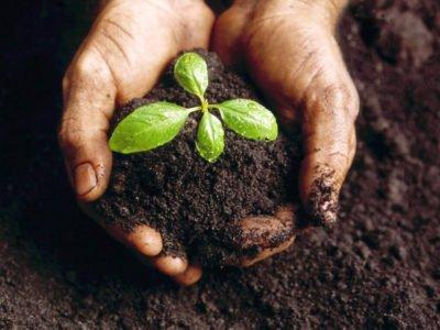 Fertilización suelo