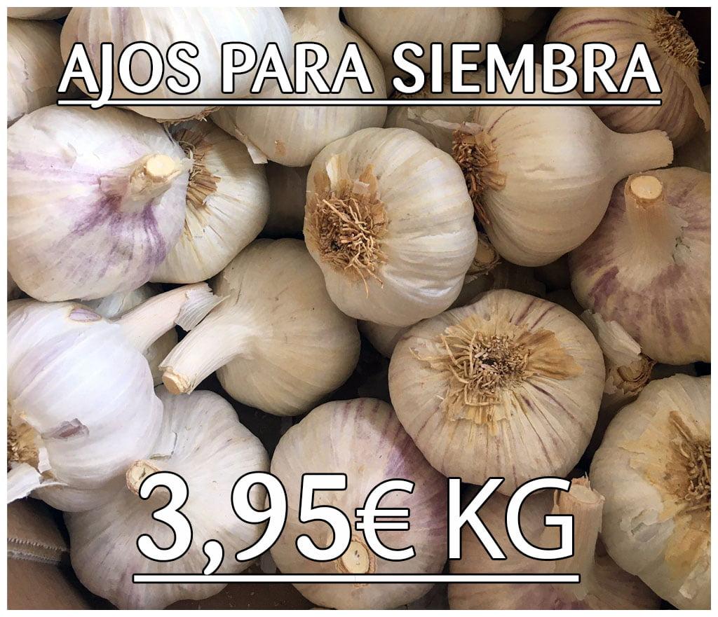 Ajos para Siembra - Almacenes Antonio Guerrero